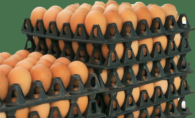 Egg Distribution Business Tips