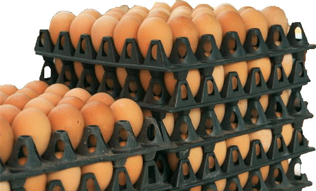 Egg Distribution Business Tips