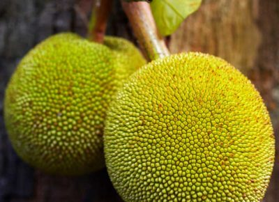 Breadfruit Nutritional Benefits