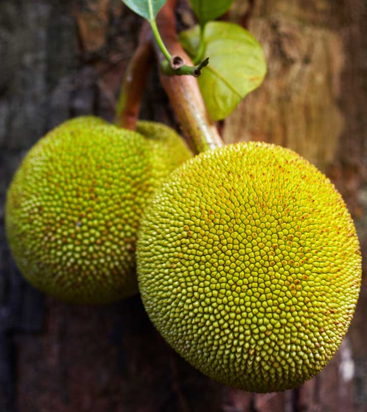 6 Nutritional Benefits Of Breadfruit You Never Knew Existed