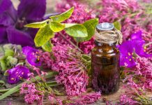Clary sage oil benefits