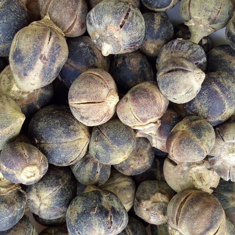 Looking For A Cure For Your Sexual Problems, Goron Tula(Silky Kola) Is All You Need
