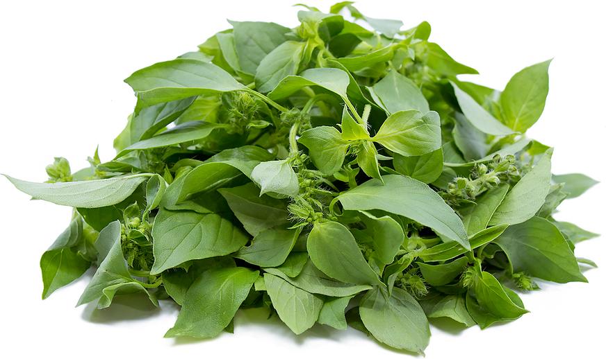 Curry Leaf Lemon Basil Well being Advantages curry leaf lemon basil health benefits
