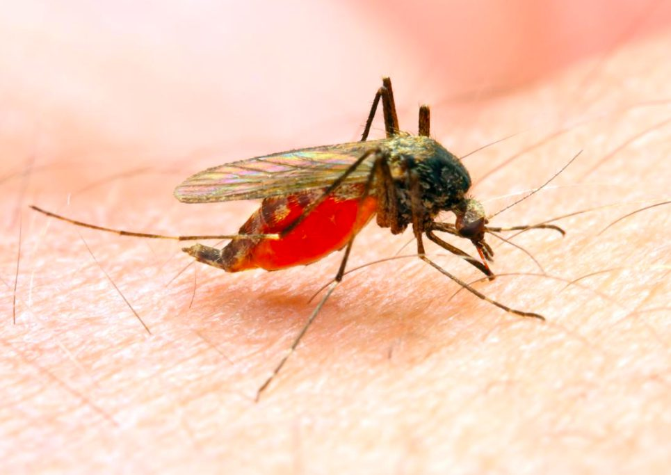 10 Key Details To Know About Malaria malaria key facts