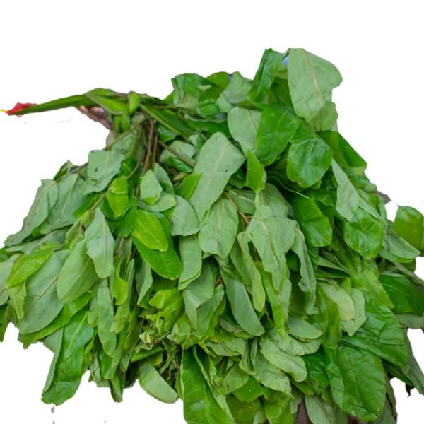 10 Well being Advantages Of Oha Leaf oha leaf health benefits